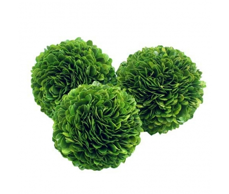 "4"" Krebs Boxwood Ball  made by Mills Floral ."