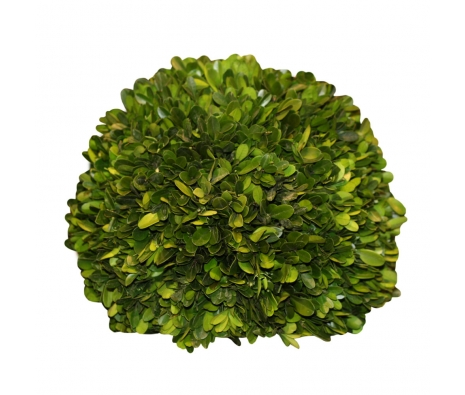 "10"" Napavine Preserved Boxwood Ball  made by Mills Floral ."