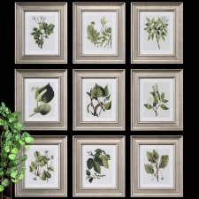 Leaf Botanical Study, Set of 12