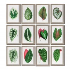 Leaves Botanical Collection, Set of 12