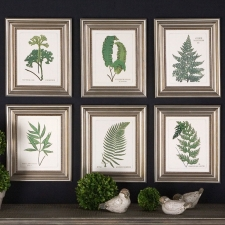 Fern Botanical Collection, Set of 6