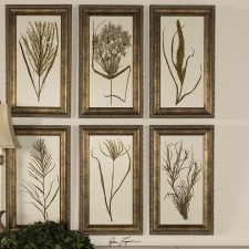 Wheat Grass Botanical Study, Set of 6