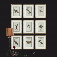 Insect Botanical Collection, Set of 12