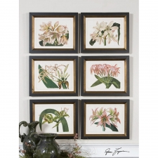 Lily Botanical Study, Set of 6