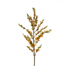 "48"" Tupelo Forsythia Stem, Yellow"