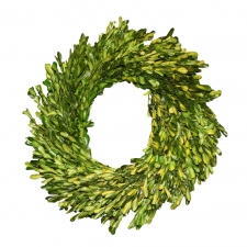 "14"" Oakville Garden Style Preserved Boxwood Wreath"