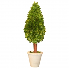"21"" Granger Preserved Boxwood Topiary Tear Drop"