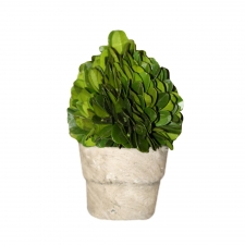 Bridgeport Preserved Boxwood Topiary Mini Egg Shape On Pot