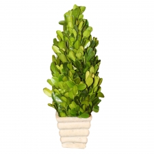 "9.25"" Aberdeen Preserved Boxwood Topiary Cone"