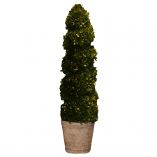 "43"" Coulee Preserved Boxwood Topiary Spiral"
