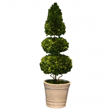 "40"" Everson Preserved Boxwood Topiary Sphere & Cone"