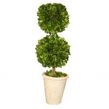 "20"" Bingen Preserved Boxwood Topiary Double Ball"