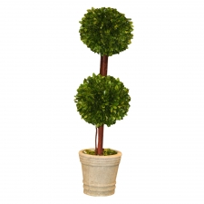 "30"" Bingen Preserved Boxwood Topiary Double Ball"