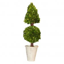 "24"" Covington Preserved Boxwood Mixed Topiary"