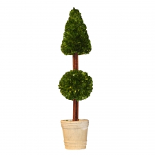 "36"" Davenport Preserved Boxwood Mixed Topiary"
