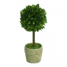 "2.5"" X 6"" Centralia Preserved Boxwood Topiary Mini"