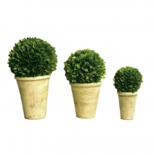 Pateros Preserved Boxwood Balls In Pot